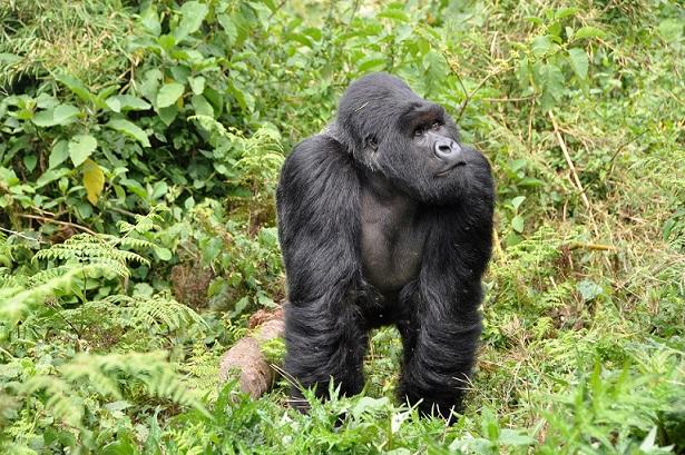 Rwanda Reopening Promotes Domestic and Regional Tourism