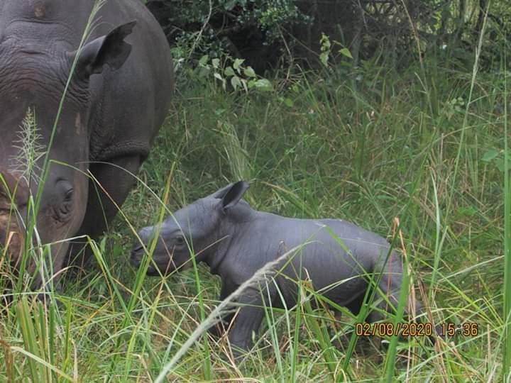Rhino Fund Uganda celebrates new birth